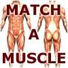 Match-A-muscolare gioco