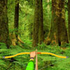 Wild Forest Targets gioco